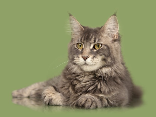 colony cats adoption center