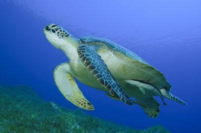 Land Turtles   PetStarter
